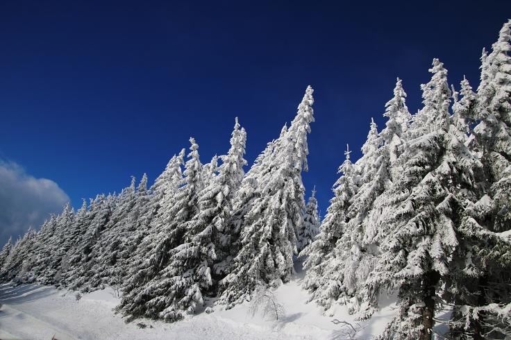 WinterWonder