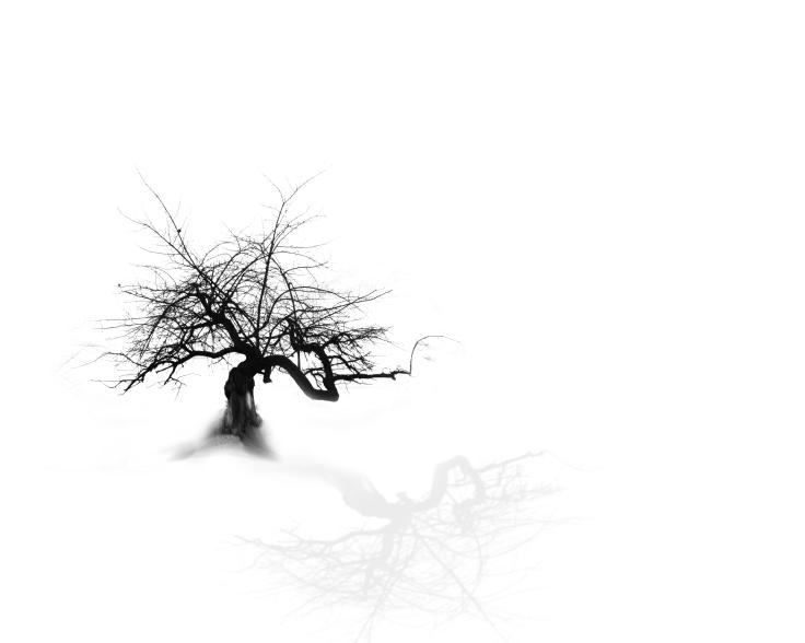 Himmelsbaum2a