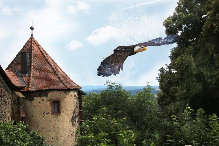 Adler_Burg2
