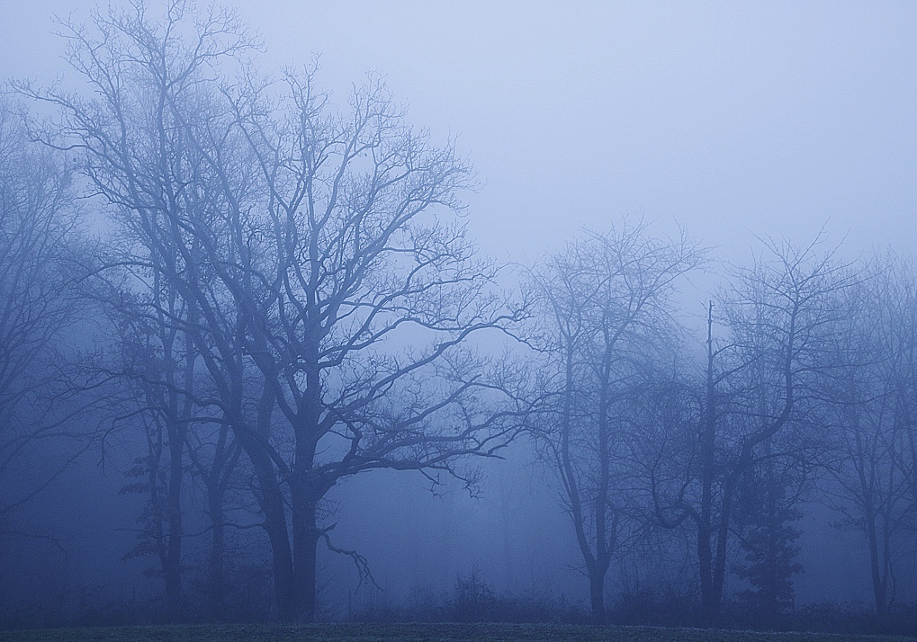 Nebel22