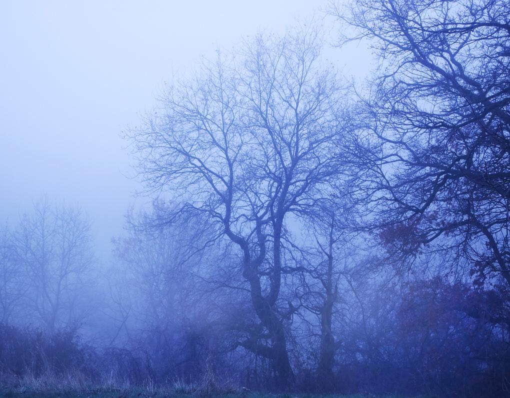 Nebel3