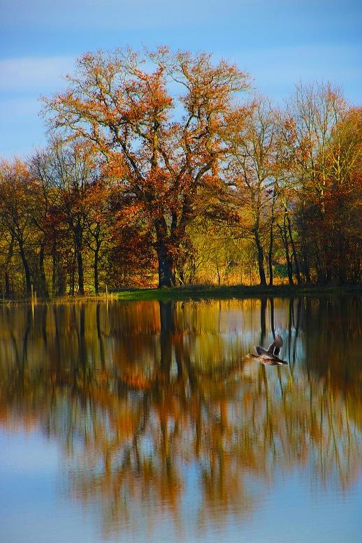Spiegelung_See_Baum_Ente.jpg