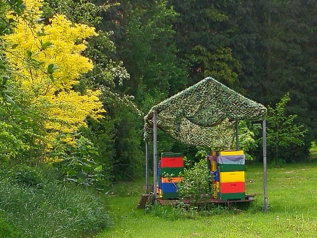 Bienenhaus.jpg