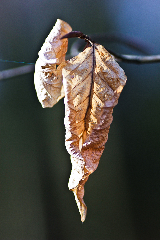 Texture_HerbstblattA.jpg