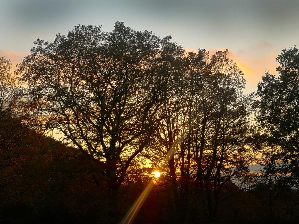 Abendwald.jpg