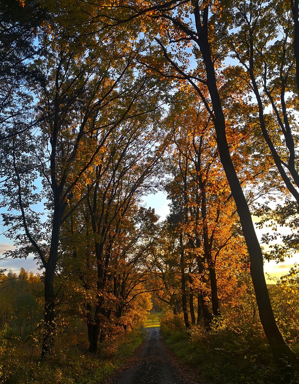 Abendwald2a.jpg