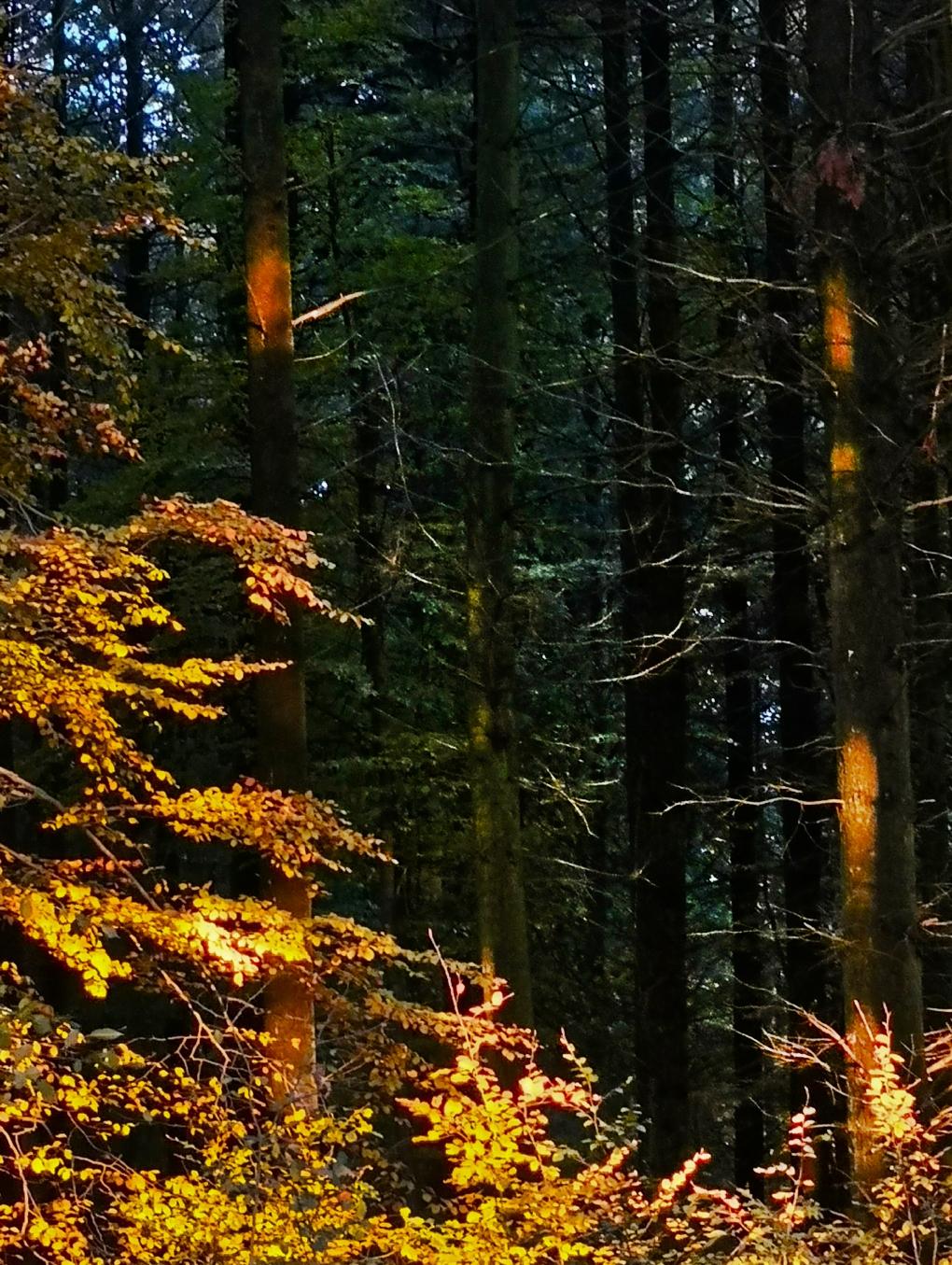 Abendwald3a.jpg