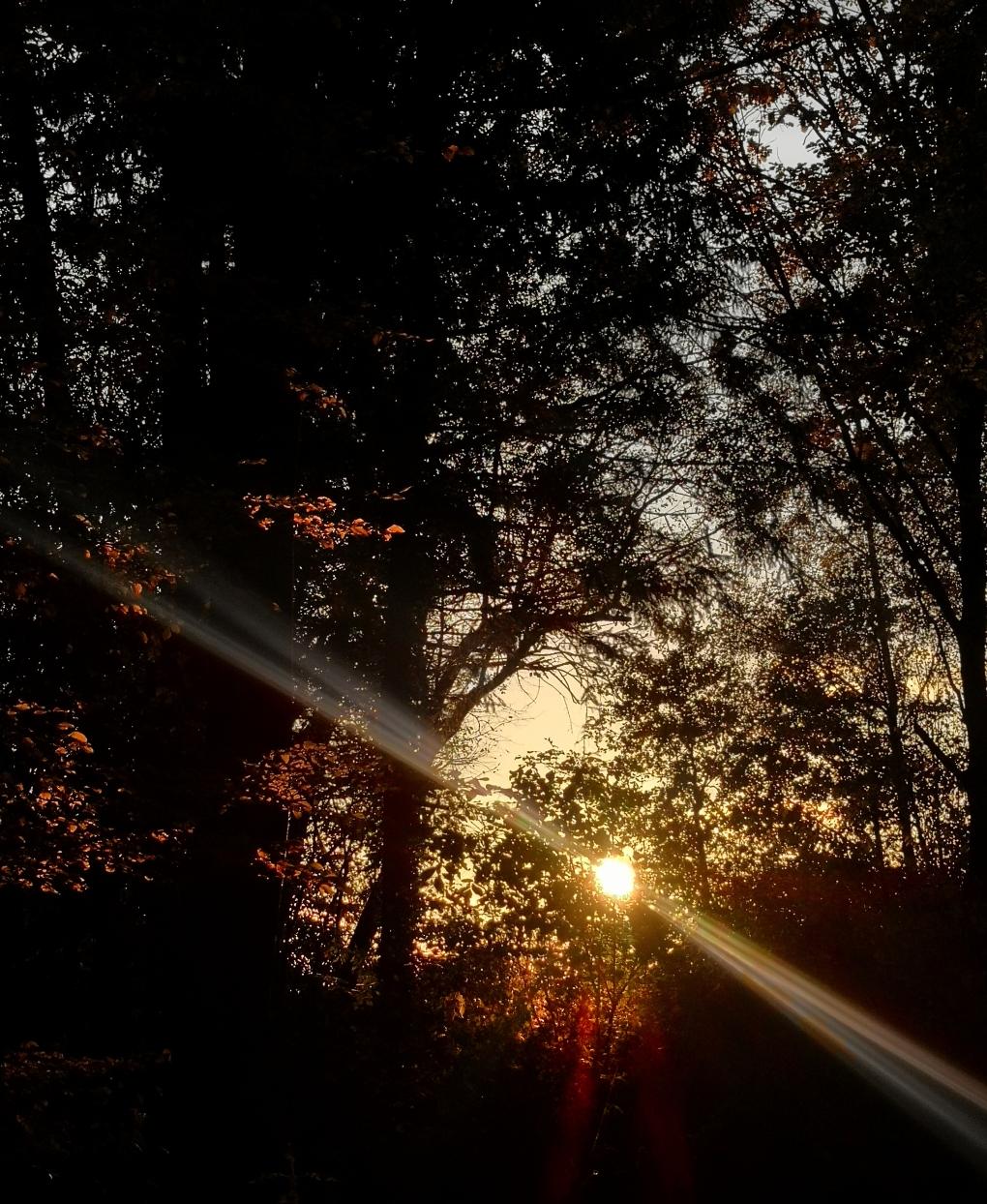 Abendwald4.jpg