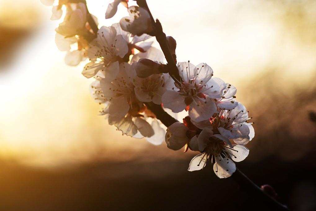 bendblüten41.jpg