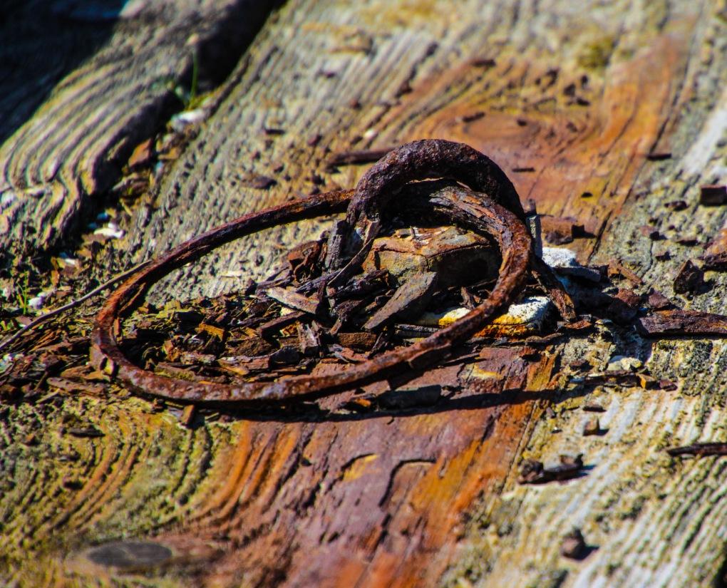 wood13-8922.jpg
