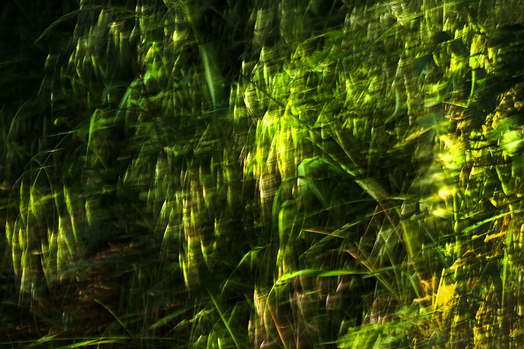 grass8