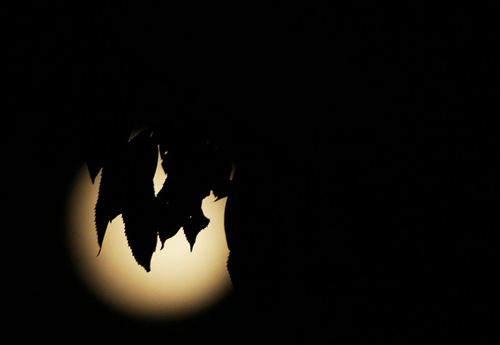 MoonLea2.jpg