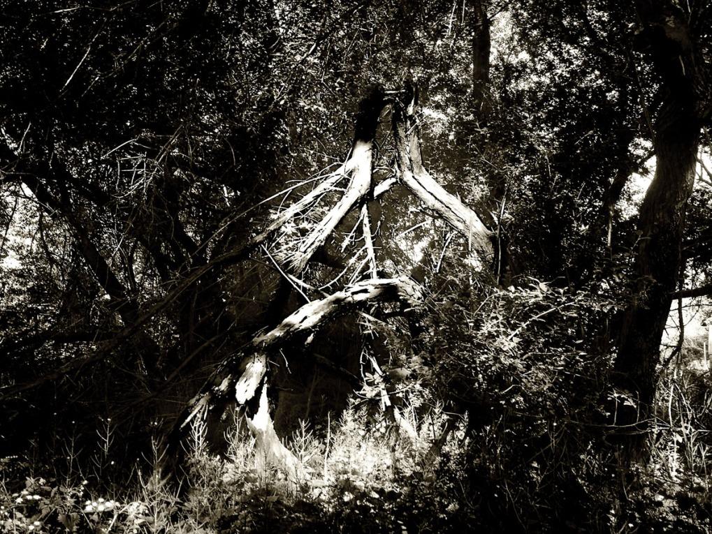 Wilderness1a