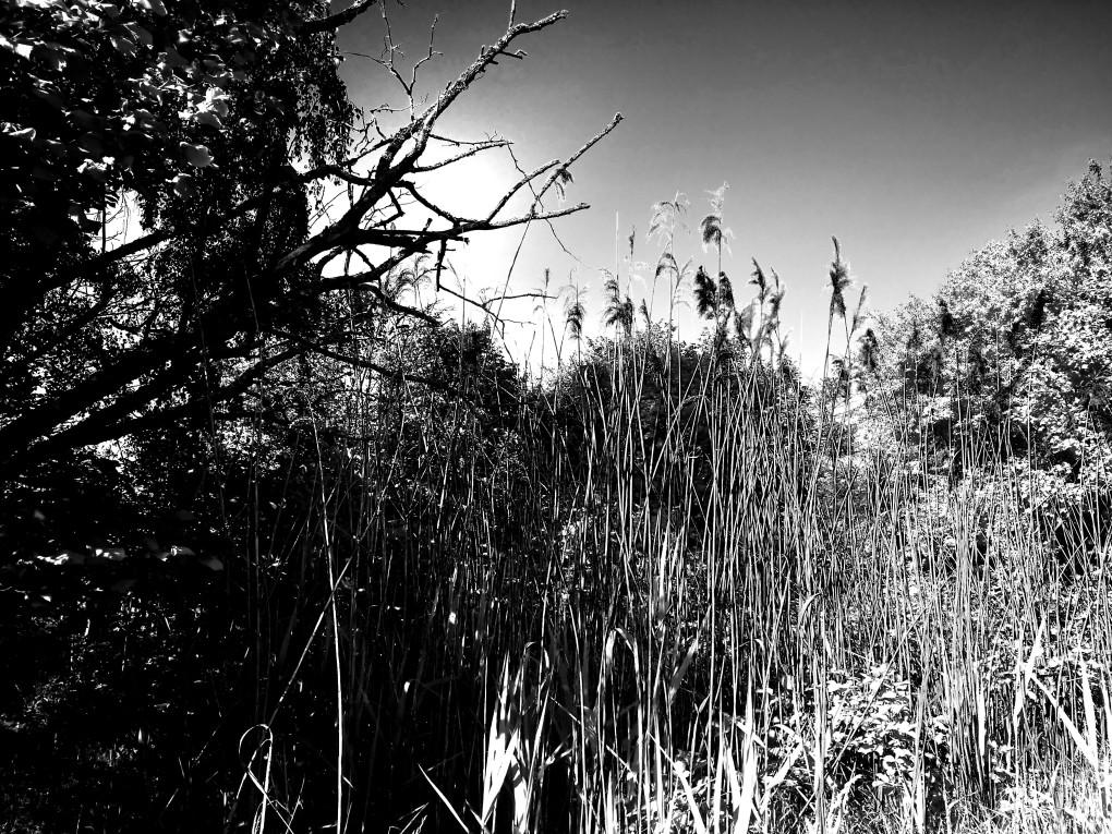Wilderness2a