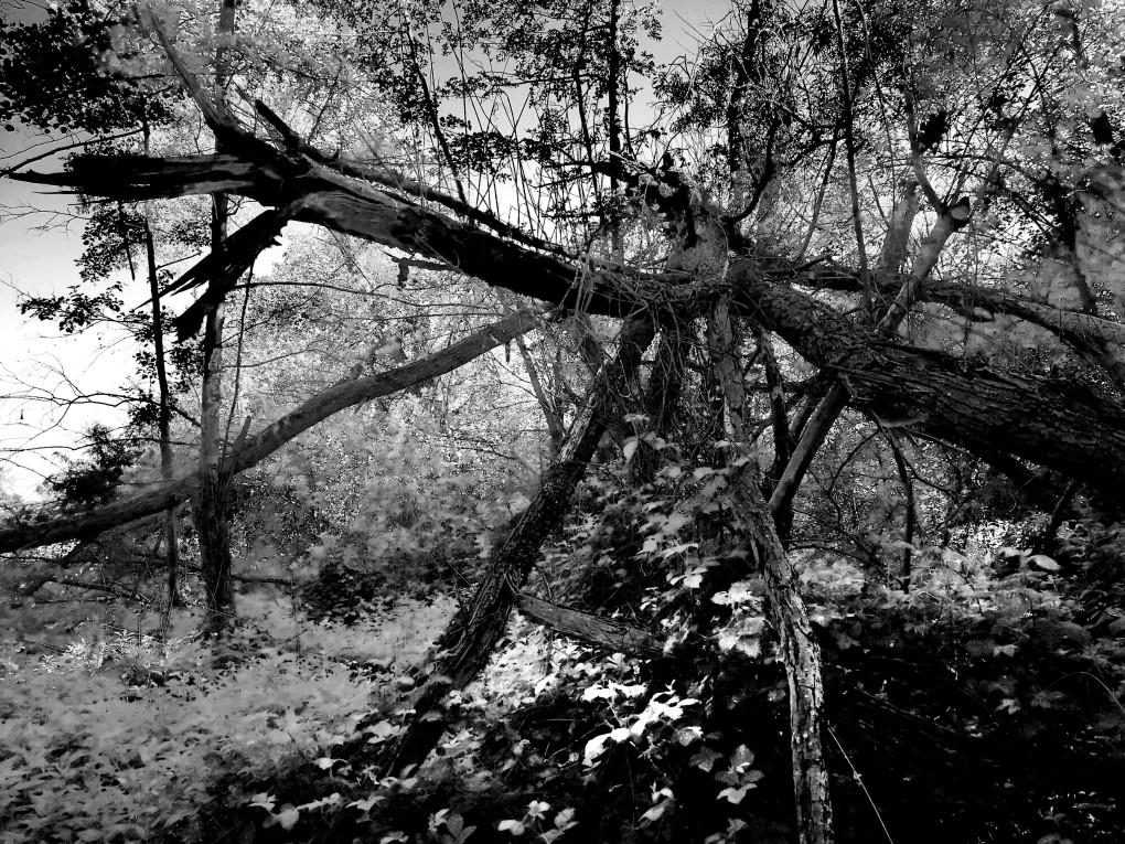 Wilderness4