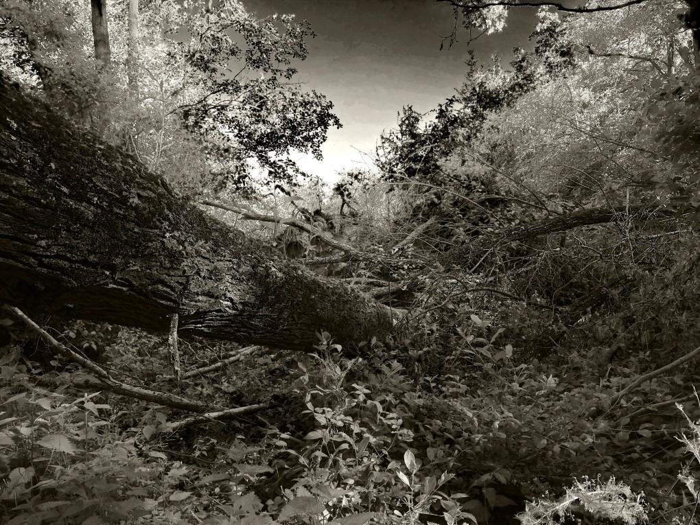 Wilderness5
